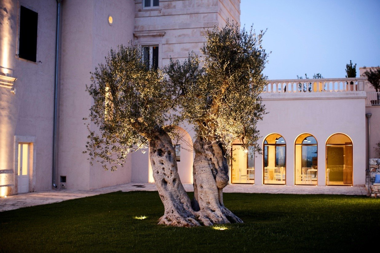 Uplight for ancient oil tree lighting